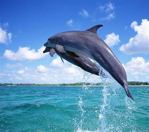Marine Animal Wallpaper - animals sea animals marine animal sea animal animal