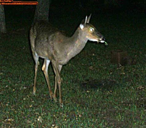deer cam images reverse search