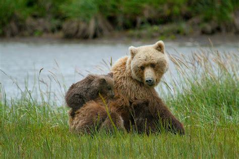 Cub Bear Hugs Man After Saving Drowning