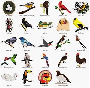 Ideas For Early Childhood: Ideas for a Preschool Bird Theme