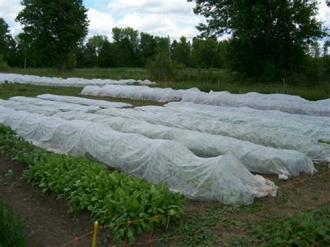 Image result for Beautiful vegetable gardens with row covers