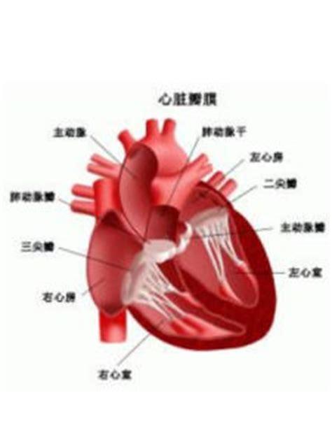 is jantung 主动脉瓣关闭不全 主动脉瓣关闭不全和主动脉狭窄的区别