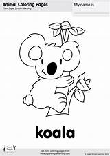 Koala Coloring Simple Super Printables sketch template