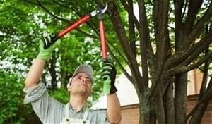 Bäume Schneiden Wann : himbeeren schneiden wie und wann macht man es richtig ~ Lizthompson.info Haus und Dekorationen