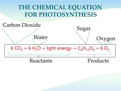 Energy Of Light Equation by Ppt Photosynthesis Transforming Light Energy To