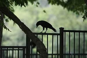 Lonely Sad Birds I am so Lonely I'm So Lonely...  Sad