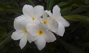 Names Of White Flowers 23 Desktop Background ...