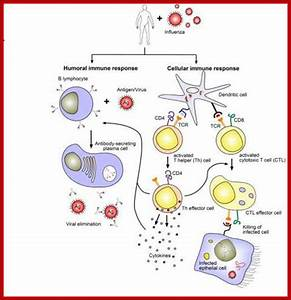 Immunology 2