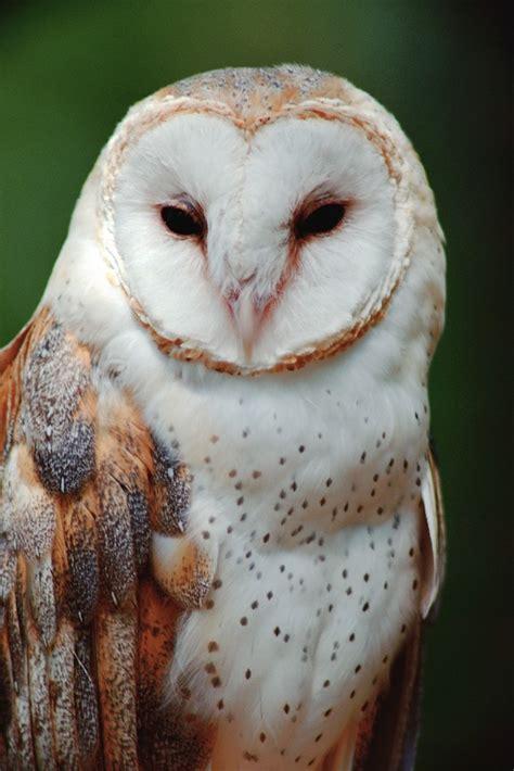 bewitching names spirit animal round up owl