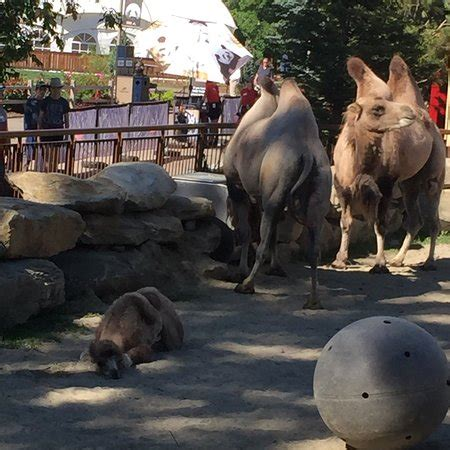 zoo calgary alberta tripadvisor save attraction