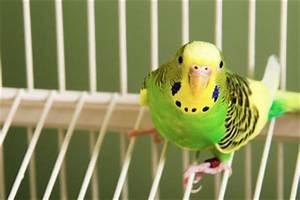 Vogelkäfig Selber Bauen : vogelk fig selber bauen anleitung f r eine voliere ~ Lizthompson.info Haus und Dekorationen