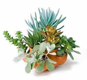 Sukkulenten Arten Bilder : zimmerpflanzen arten bilder von den beliebtesten ~ Lizthompson.info Haus und Dekorationen