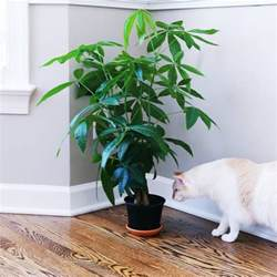 plants safe for cats bringing nature indoors house plants that are safe for