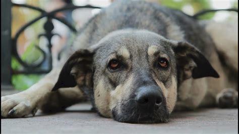 Can My Dog Give Blood? | khou.com