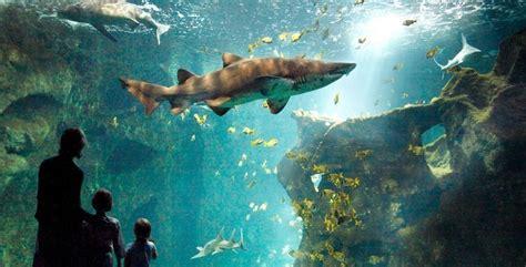 aquarium du grand lyon tarif aquarium du grand lyon tarif 28 images aquarium du grand lyon foto 2017 aquarium du grand