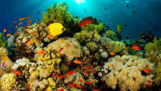 Ocean Fauna Under Water Coral Reefs With Beautiful Coral In Different      Coral Reef Wallpaper 1920x1080