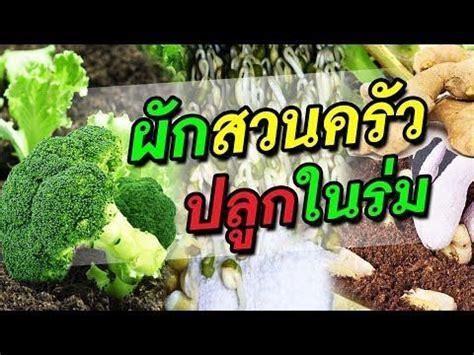 การปลูกแครอทไว้กินเองที่บ้าน!!!ด้วยวิธีง่ายๆค่ะ - YouTube ...
