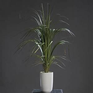 Kunstgras Im Topf : dracena im topf drachenbaum kunstgras kunstpflanze gr n 97 cm ebay ~ Eleganceandgraceweddings.com Haus und Dekorationen