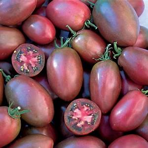 TOMATO PURPLE RUSSIAN | Heritage & Heirloom Tomato Seeds
