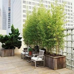 Bambus Pflanzen Kübel : balkon k bel fabelhaft bambus pflanzen kubel bewundernswert bambus als sichtschutz fur terrasse ~ Frokenaadalensverden.com Haus und Dekorationen