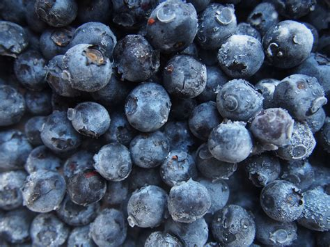 Guide To Freezing Blueberries