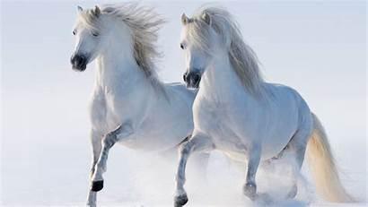 Seven Horse Horses Wallpapers Desktop Wallpaperswide Widescreen