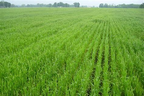 ohio wheat growth stages agfax