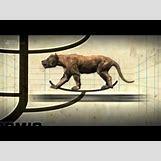 Prehistoric Predators Bear Dog | 480 x 360 jpeg 13kB