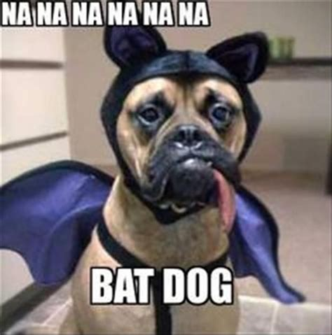 Bat Meme - funny bat dog meme image