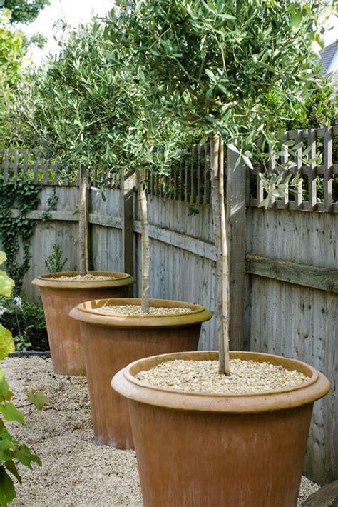 Best 25+ Potted Trees Ideas On Pinterest  Indoor Lemon