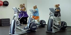 Musique Pub Kia : les hamsters sont de retour dans une pub pour la voiture kia soul ~ Maxctalentgroup.com Avis de Voitures