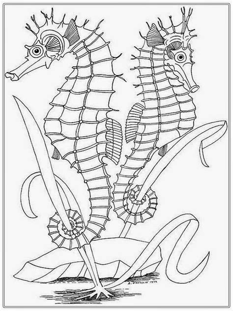 seashore adult coloring pages coloring home
