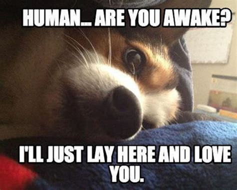 Silly Love Memes - cute animal i love you meme www imgkid com the image kid has it
