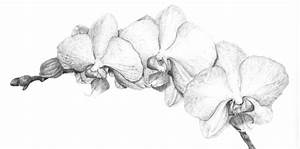 Orchid Botanical Illustration by LateNightProject on ...
