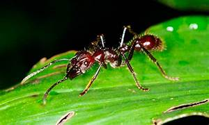 Was Essen Ameisen : was fressen ameisen was fressen ~ Lizthompson.info Haus und Dekorationen