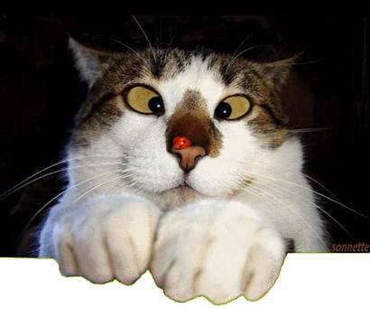Chat Humour Drole Gifs Centerblog Animaux Qui