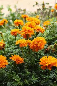 15 Best Annual Flowers