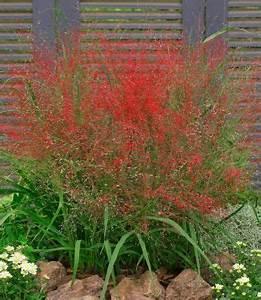 Immergrüne Pflanzen Winterhart : 85 winterharte immergr ne pflanzen liste und bersicht ~ A.2002-acura-tl-radio.info Haus und Dekorationen