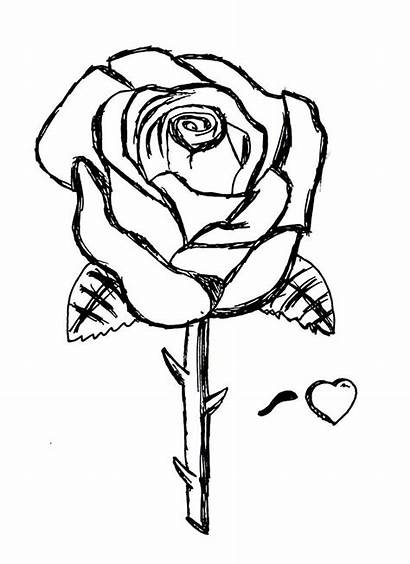 Rose Coloring Roses Colorare Disegni Stampare Printable