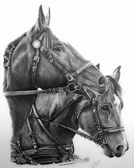 Working Pencil Drawing Horse
