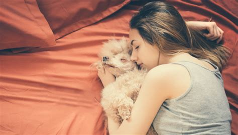 Nova pesquisa mostra que acariciar cachorros funciona como ...