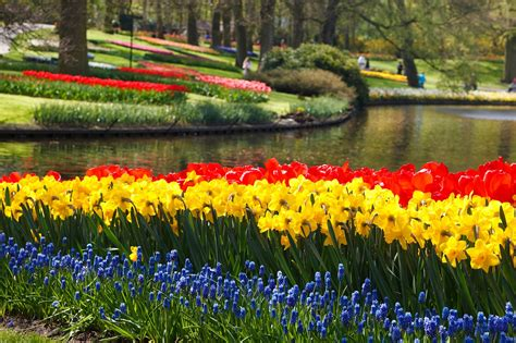 Nīderlandes pavasara košums!