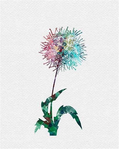 Watercolor Dandelion Flower Dandelions Flowers Drawing Clipart