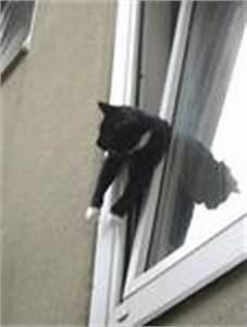Fliegen Im Fensterrahmen : katze steckt in fenster fest laatzen ~ Buech-reservation.com Haus und Dekorationen