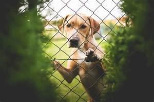 Kleiner Zaun Für Hunde : kleiner hund hinter dem zaun download der kostenlosen fotos ~ Frokenaadalensverden.com Haus und Dekorationen