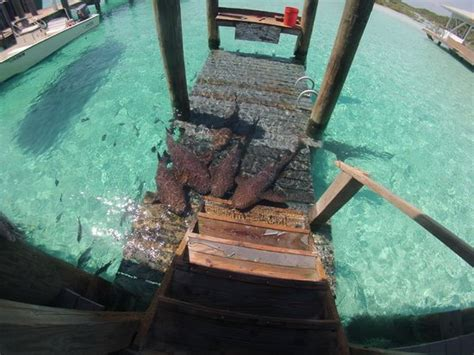 Freedom Boat Club Ta Prices by Snorkeling At Exumas Land And Sea Park Picture Of