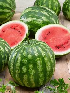 Watermelon Cal Sweet Bush | All-America Selections