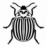 Beetle Potato Illustrations Silhouette Clip sketch template