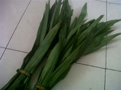 pandan leaf ramadhan and pandan leaves recipes in my kitchen mommyvonzechs