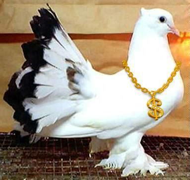 funny pictures  funny sms beautiful pigeon